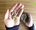 Welche Vorteile bieten Kapseln beim Einnehmen von Kratom?